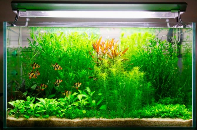 CO2 for Aquariums helps the plants thrive.